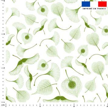 Ginkgo vert - Fond blanc